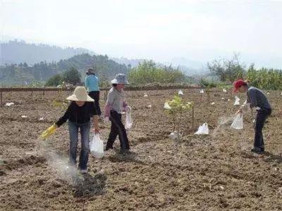 怎么给易缺锌地块和作物补锌?